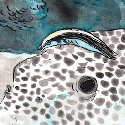Les paupières des poissons